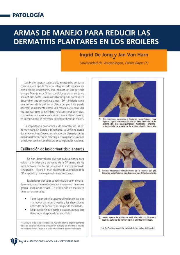 Armas de manejo para reducir las dermatitis plantares en los broilers