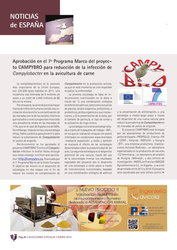 Aprobación en el 7º Programa Marco del proyecto CAMPYBRO para reducción de la infección de Campylobacter en la avicultura de carne