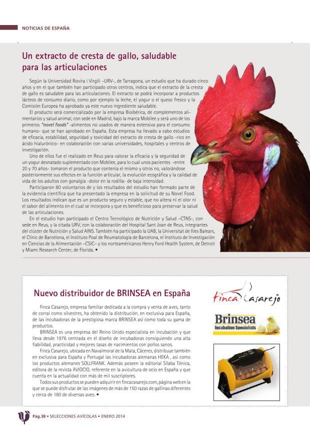 Un extracto de cresta de gallo, saludable para las articulaciones