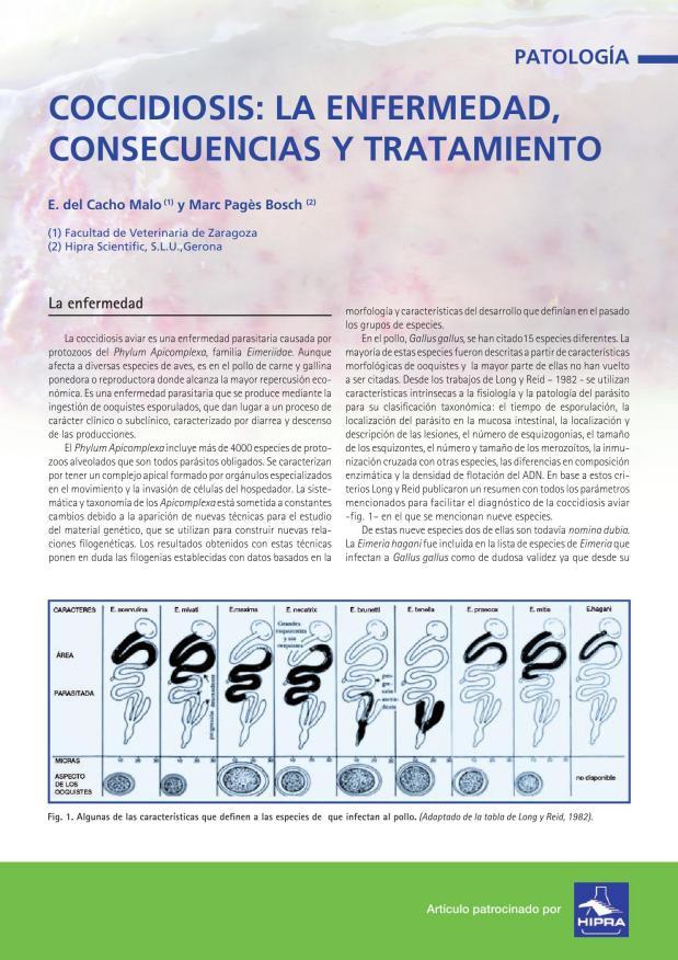 Coccidiosis: la enfermedad, consecuencias y tratamiento