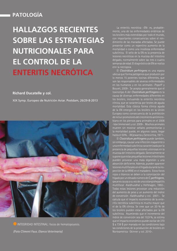 Hallazgos recientes sobre las estrategias nutricionales para el control de la enteritis necrótica