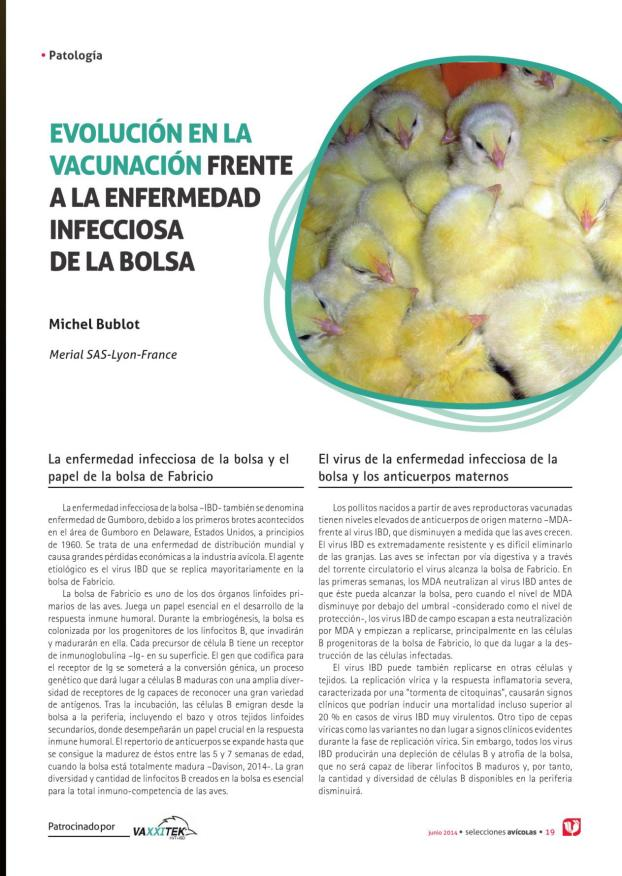 Evolución en la vacunación frente a la enfermedad infecciosa de la bolsa