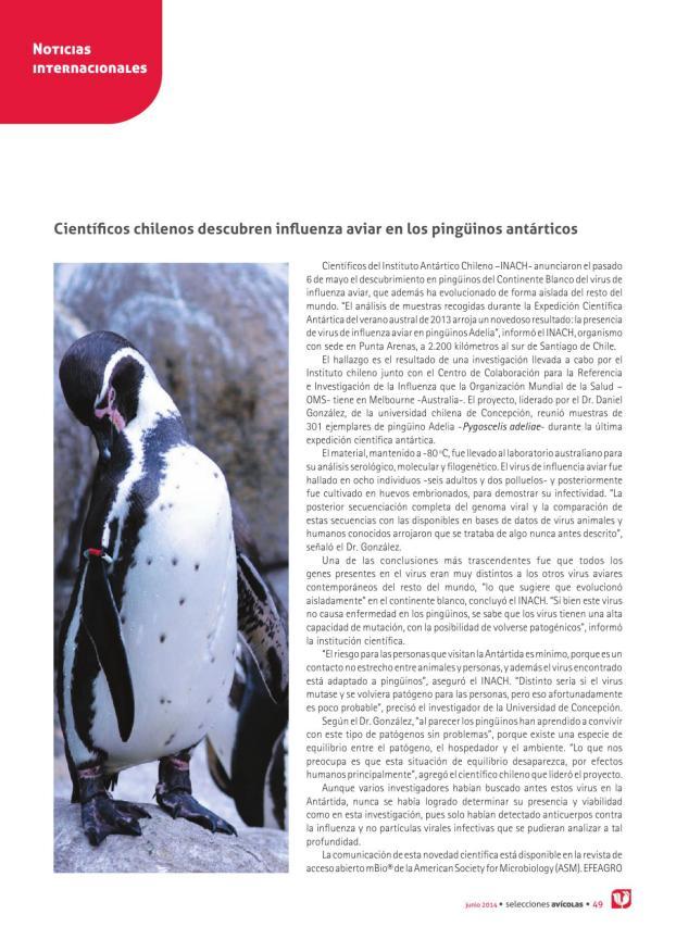 Científicos chilenos descubren influenza aviar en los pingüinos antárticos