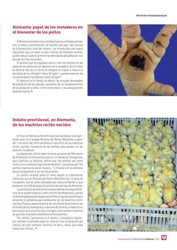 Alemania: papel de los mataderos en el bienestar de los pollos