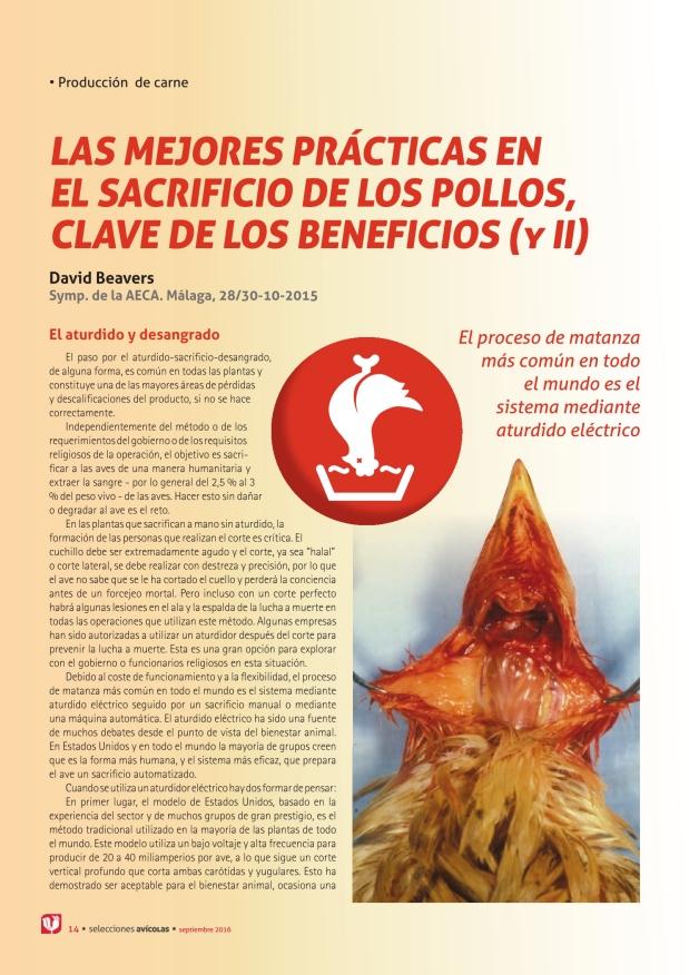 Las mejores prácticas en el sacrificio de los pollos, clave de los beneficios (y II)