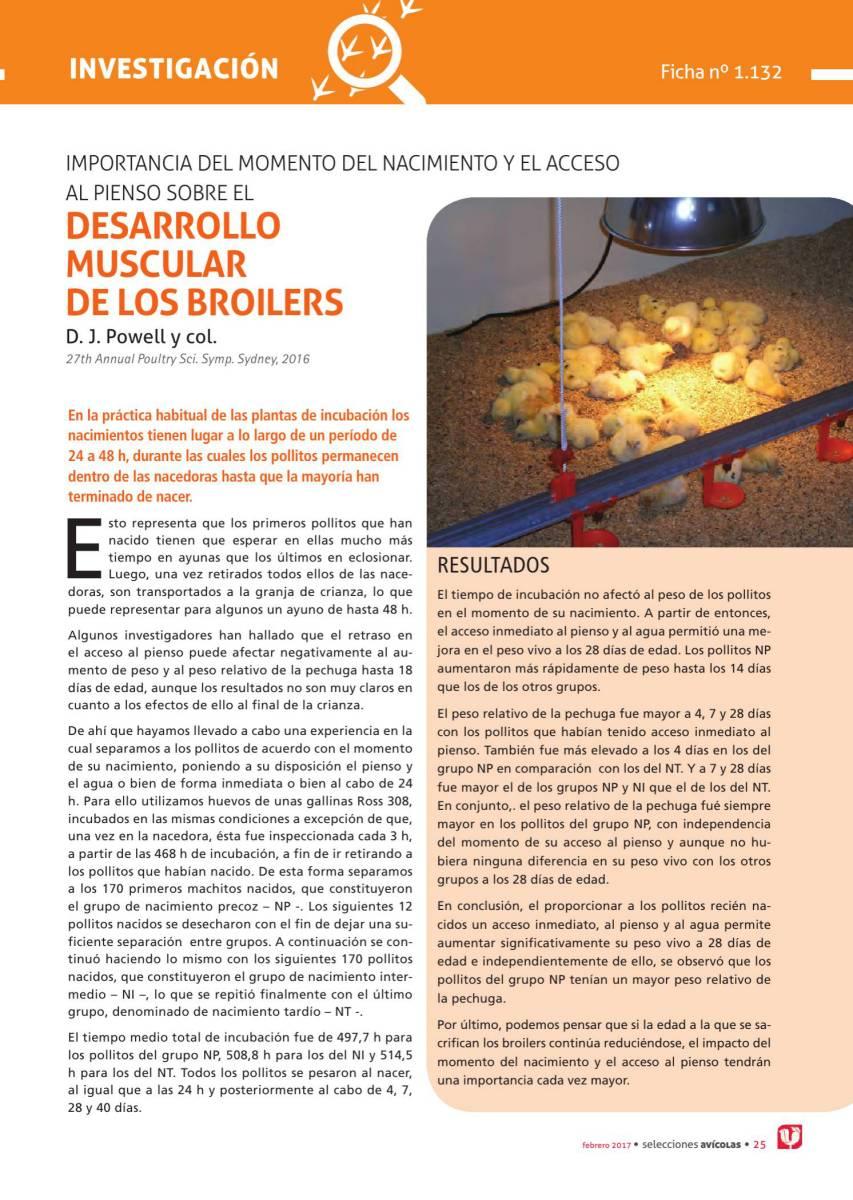IMPORTANCIA DEL MOMENTO DEL NACIMIENTO Y EL ACCESO  AL PIENSO SOBRE EL DESARROLLO  MUSCULAR  DE LOS BROILERS