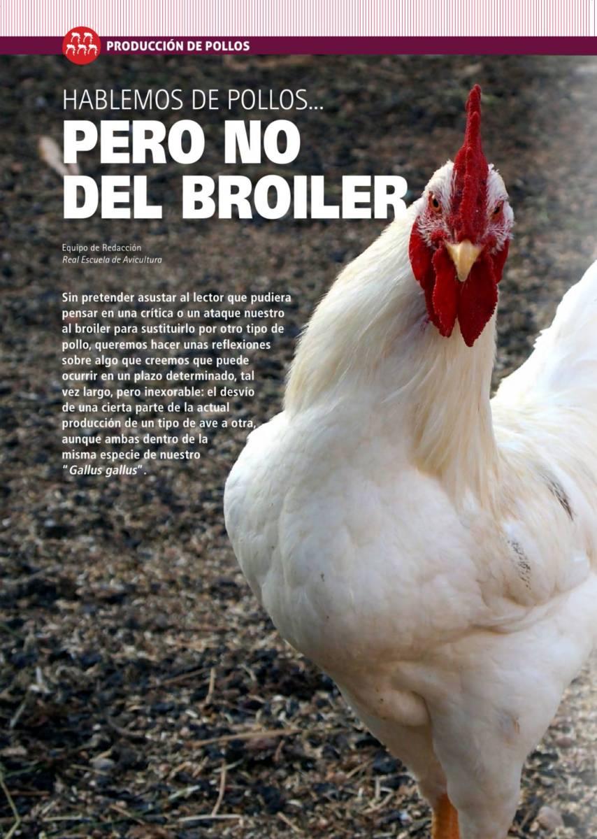 Hablemos de pollos... pero no del broiler