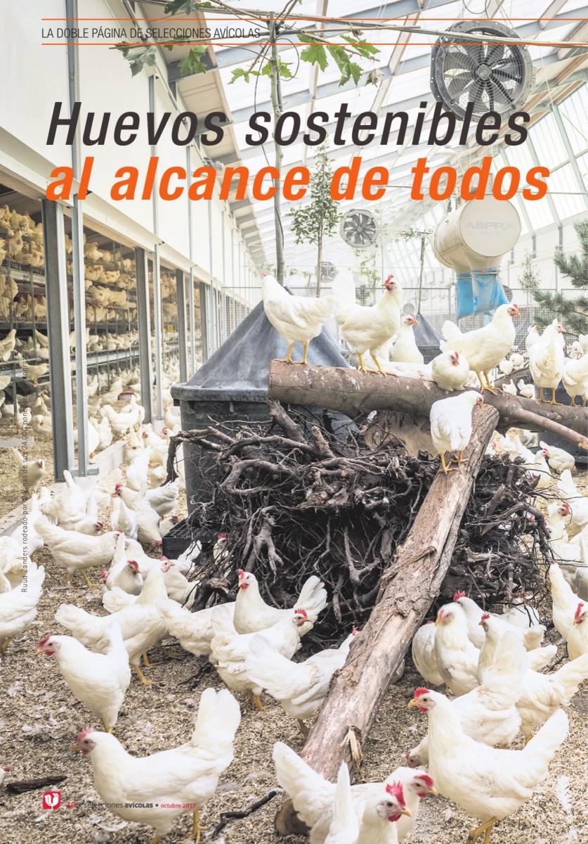 Huevos sostenibles  al alcance de todos