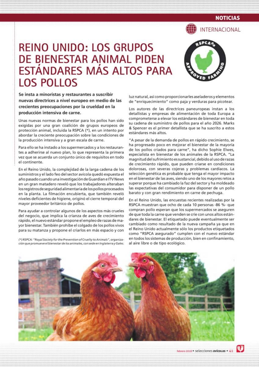 Reino Unido: Los grupos de bienestar animal piden estándares más altos para los pollos