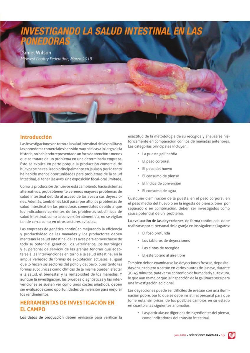 INVESTIGANDO LA SALUD INTESTINAL EN PONEDORAS