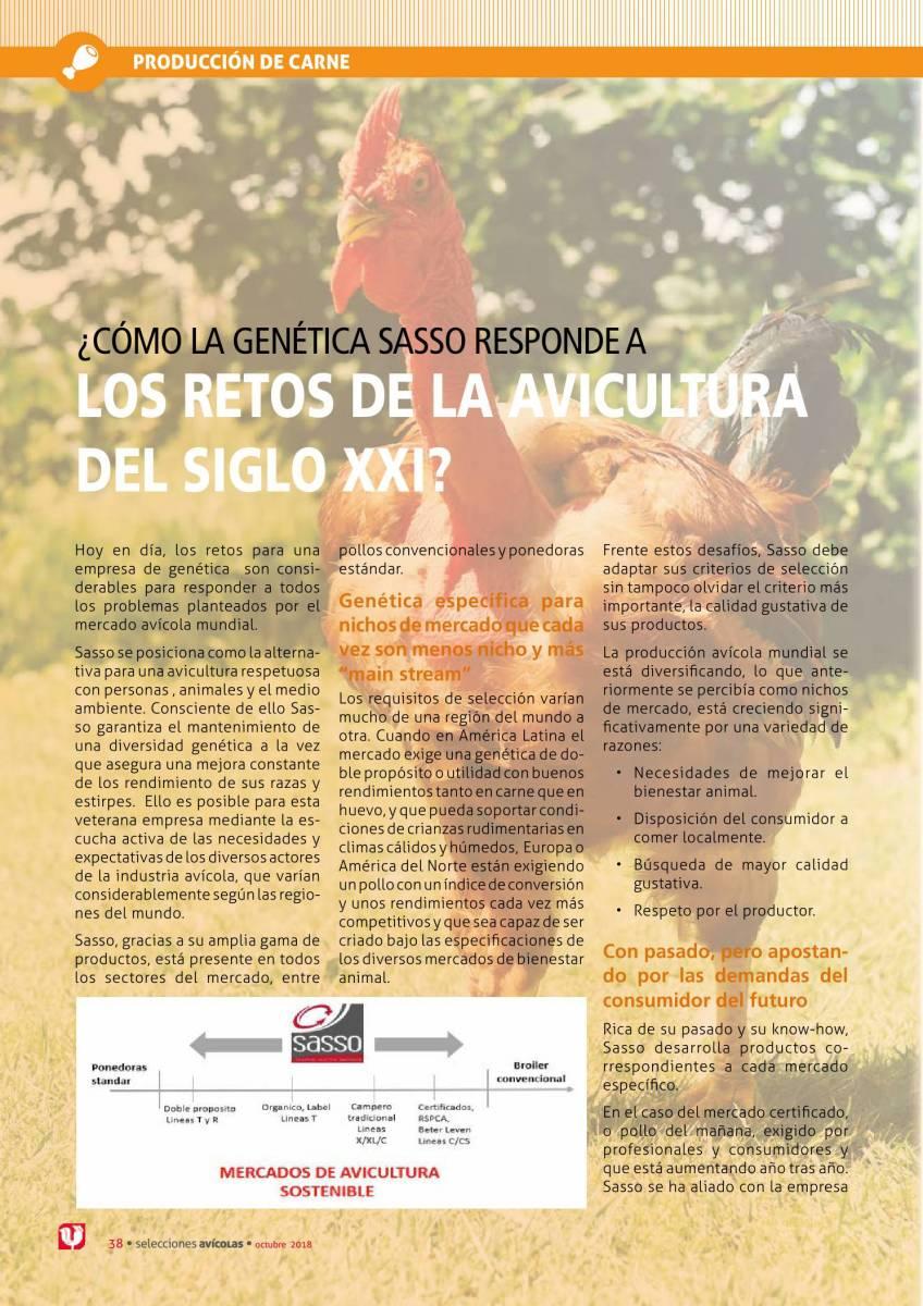 ¿Cómo la genética Sasso responde a los retos de la avicultura del siglo XXI?