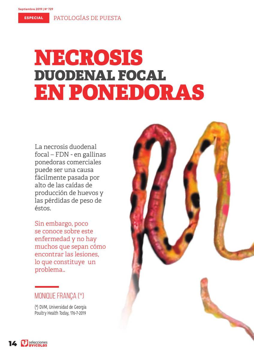Necrosis duodenal focal en Ponedoras