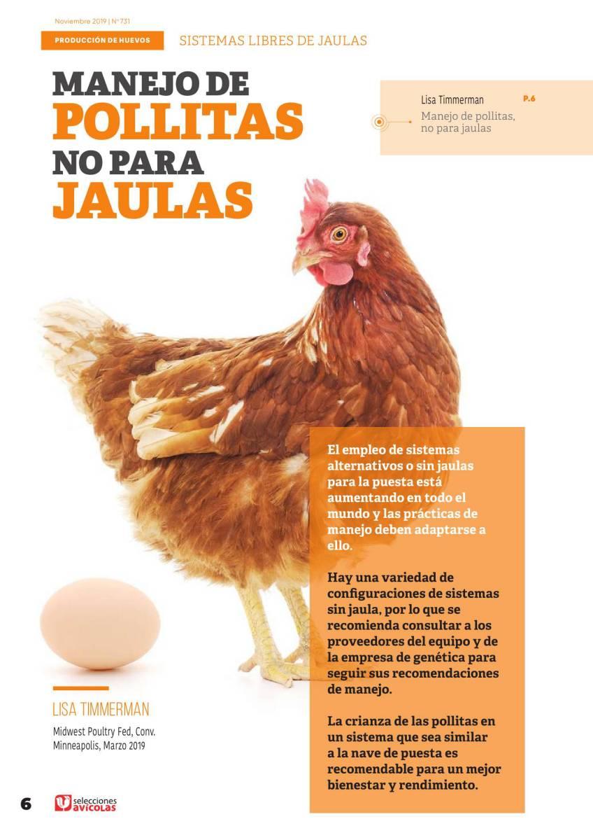 ESPECIAL HUEVOS LIBRES DE JAULAS: Manejo de pollitas no para jaulas
