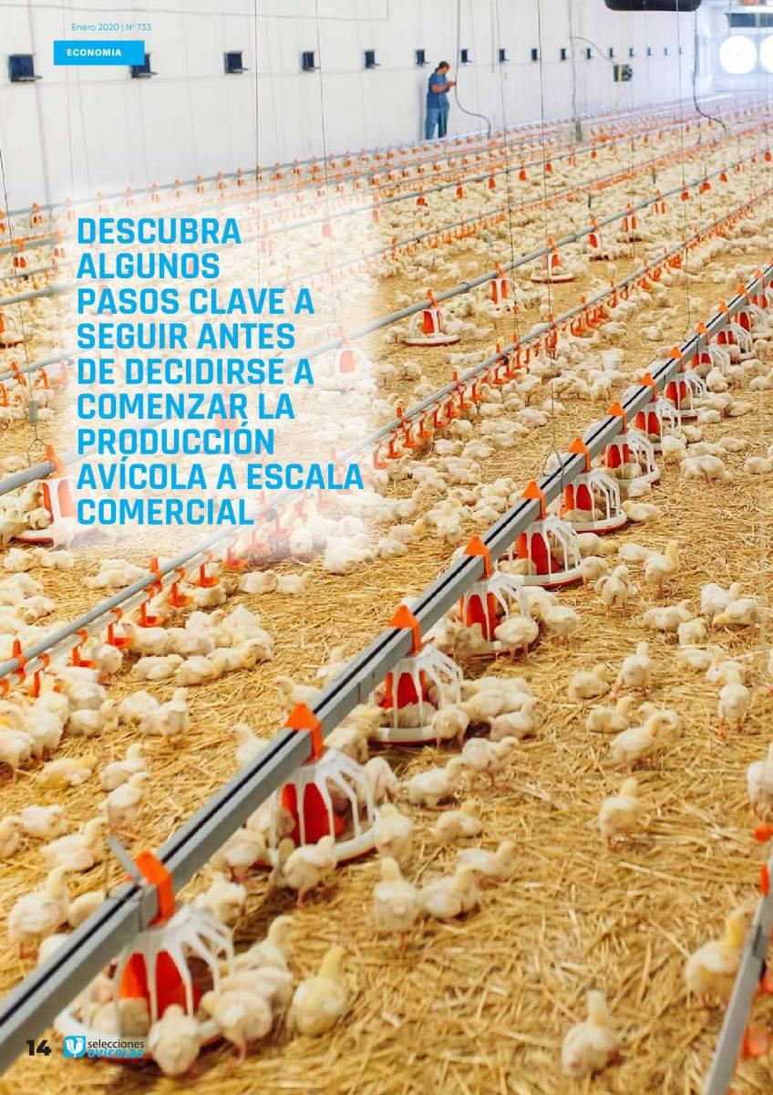 ¿Pensando en iniciar un negocio avícola? Esto es lo que hay que saber