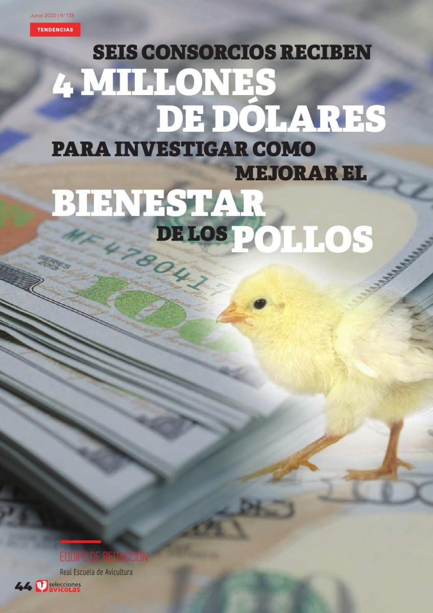 Seis consorcios reciben 4 M de USD para investigar cómo mejorar el bienestar de los pollos