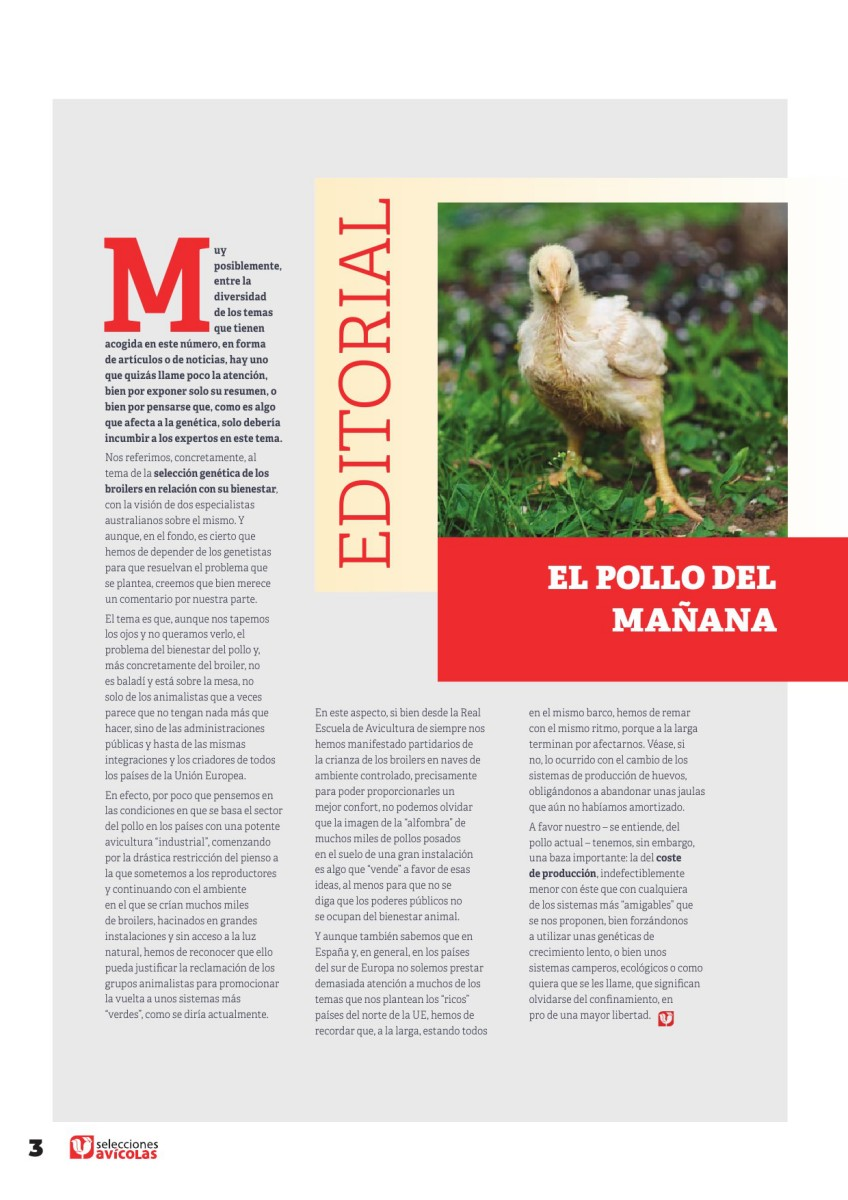 Editorial: El pollo del mañana