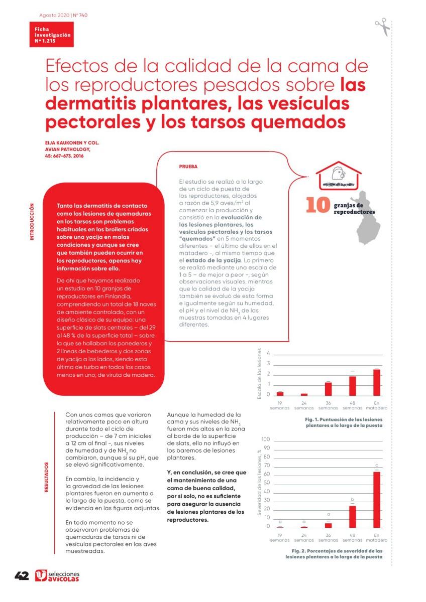 Efectos de la calidad de la cama de los reproductores pesados sobre las dermatitis plantares, las vesículas pectorales y los tarsos quemados