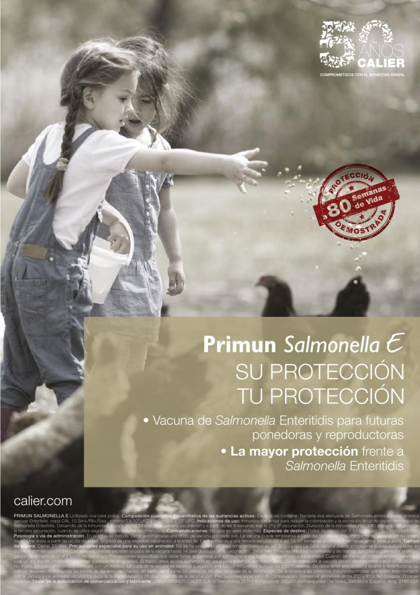 Ad CALIER Primum Salmonela