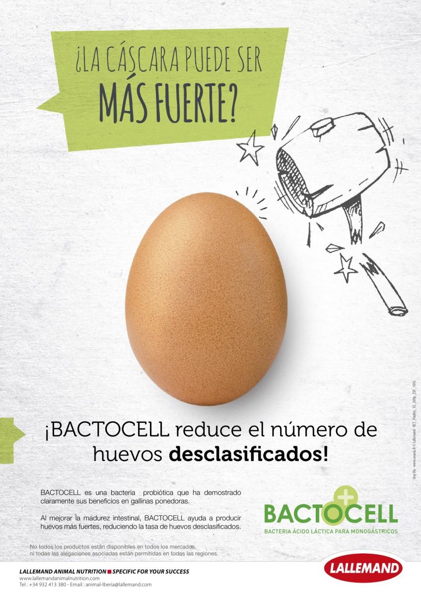 Ad LALLEMAND bactocel reduce huevos desclasificados