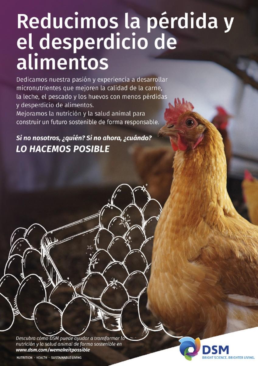 Ad DSM mejorando salud y nutrición aviar