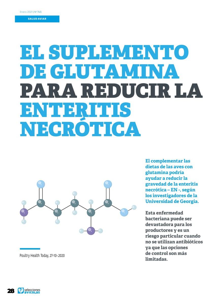 El suplemento de glutamina para reducir la enteritis necrótica