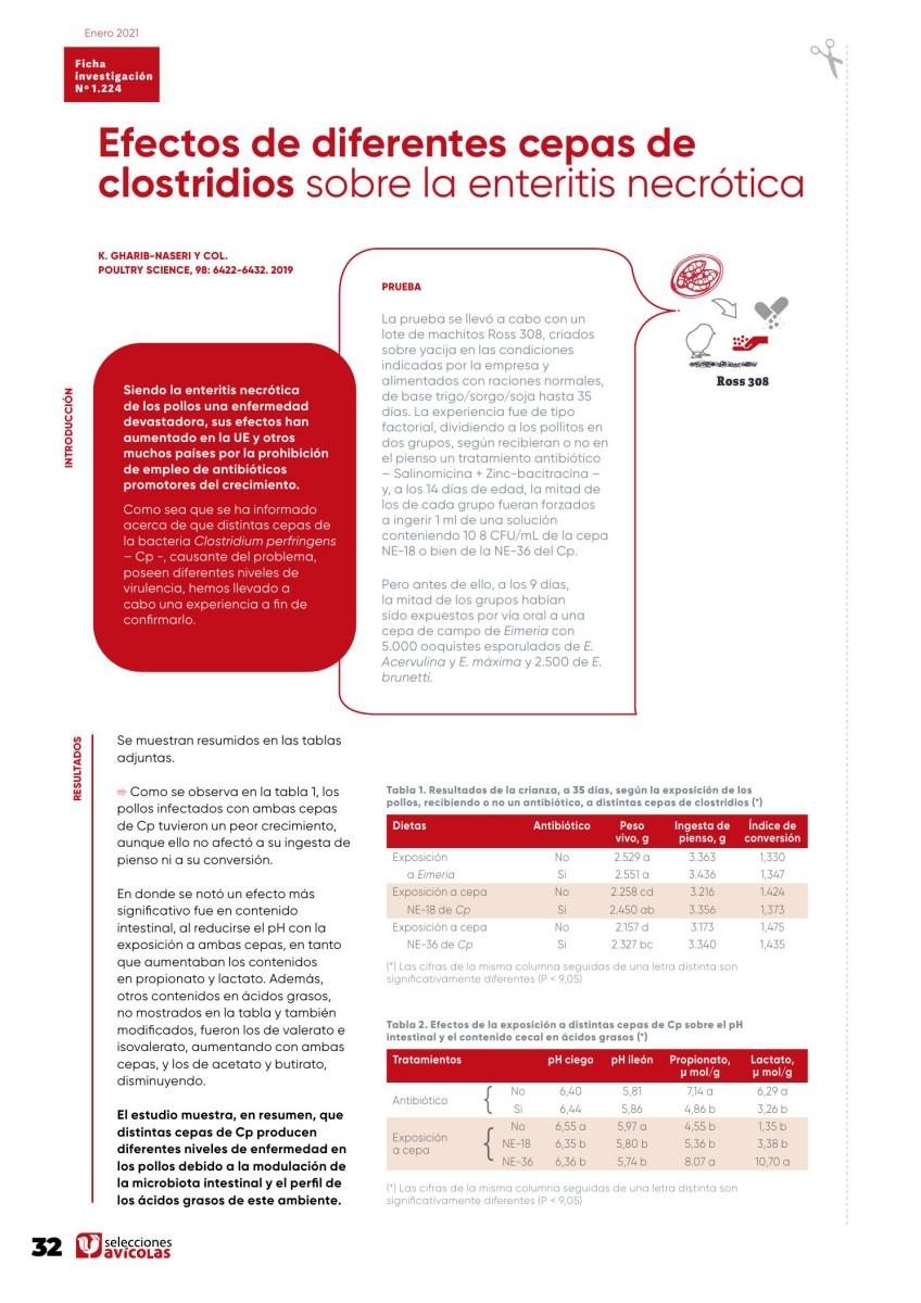 Efectos de diferentes cepas de clostridios sobre la enteritis necrótica