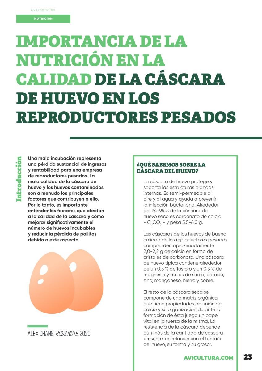 Importancia de la nutrición en la calidad de la cáscara de huevo en los reproductores pesados