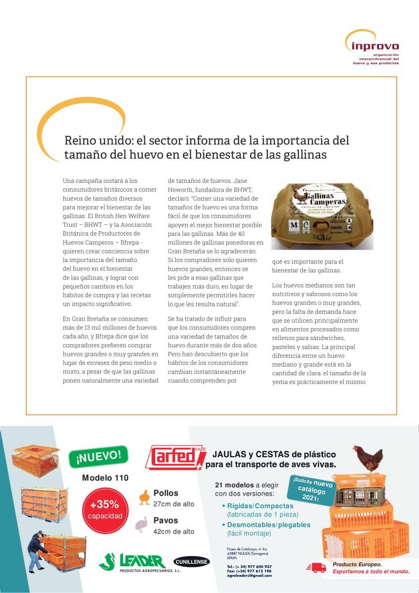 Reino unido: el sector informa de la importancia del tamaño del huevo en el bienestar de las gallinas