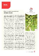 Brasil exporta habas de soja a Estados Unidos
