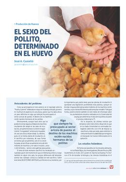 El sexo del pollito, determinado en el huevo