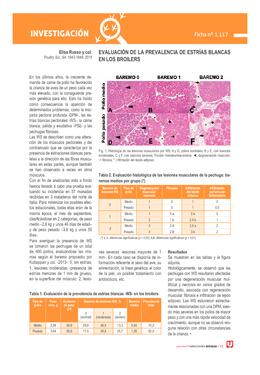 Evaluación de la prevalencia de estrías blancas en los broilers