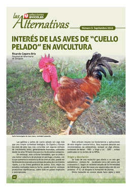"""Interés de las aves de """"cuello pelado"""" en avicultura"""