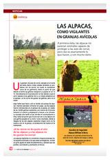 Las alpacas como vigilantes en granjas avícolas