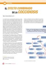 El efecto combinado de la Coccidiosis