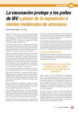 La vacunación protege a los pollos de IBV a pesar de la exposición a niveles moderados de amoníaco