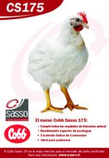 Publicidad Sasso