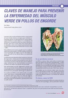 Claves de manejo para prevenir la enfermedad del músculo verde en pollos de engorde