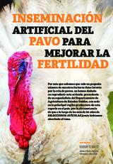 Inseminación artificial del pavo para mejorar la fertilidad