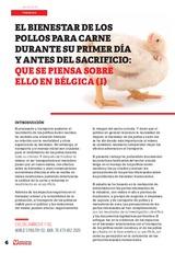 El bienestar de los pollos para carne durante su primer día y antes del sacrificio: que se piensa sobre ello en Bélgica