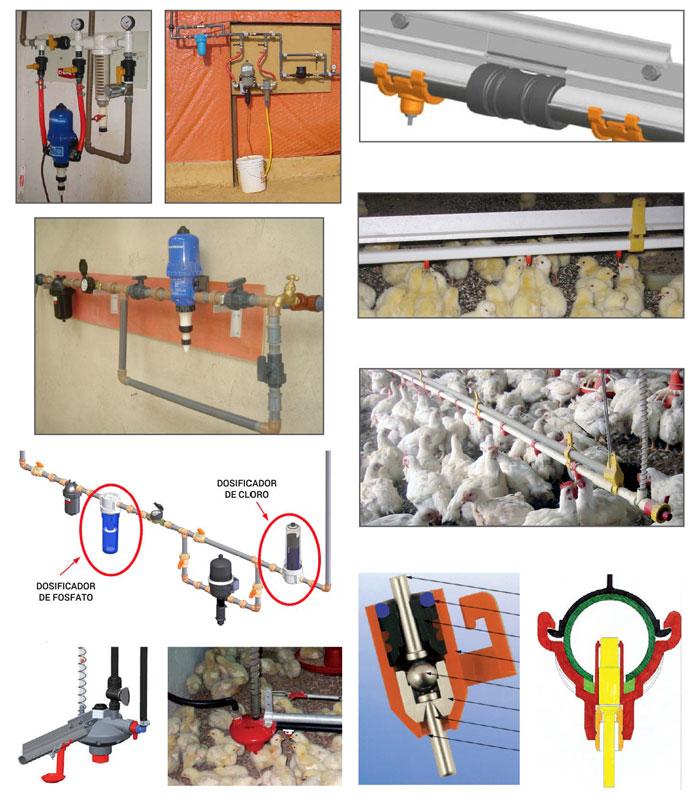Selecciones Avícolas Manejo De Bebederos De Tetinas Para Pollos De Engorde