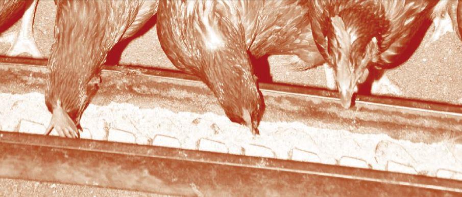 baja_la_produccion_espanola_de_pienso_respecto_a_2012_head.jpg