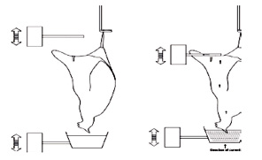 Fig_5_opt.jpeg