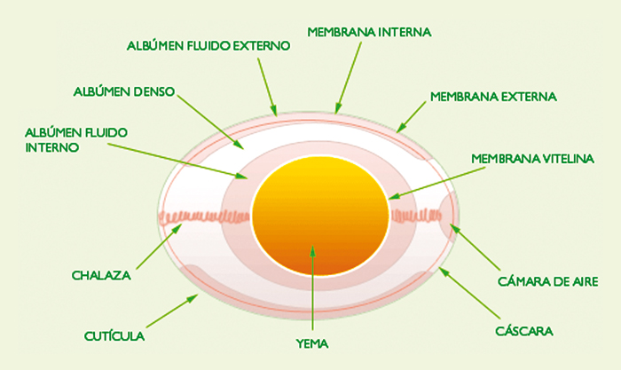 Cascara de huevo composicion