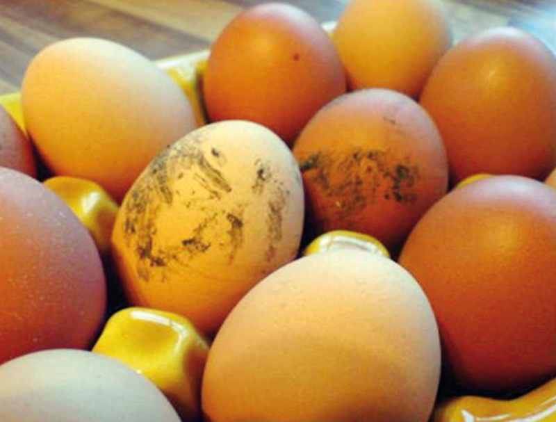 Huevos_sucios.jpg