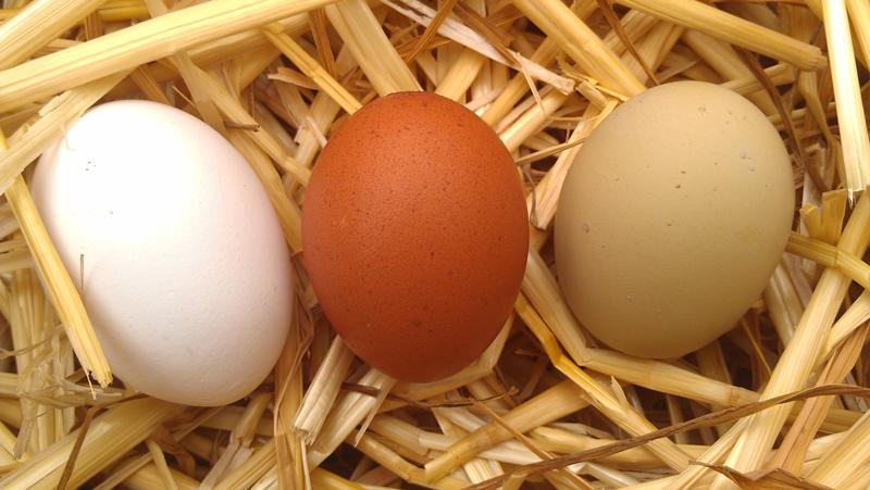 egg_colors.jpg