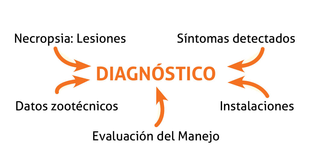 Patologia_Papel_veterinario_diagnostico_SA201510_1.jpg