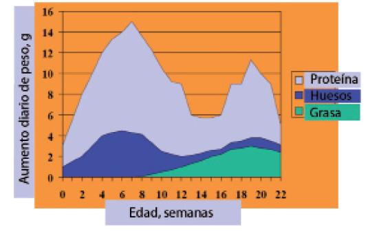 Figura1_desarrollo_fmt.jpeg