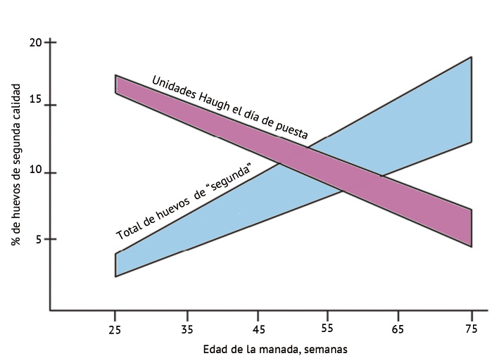 figura_4.jpeg