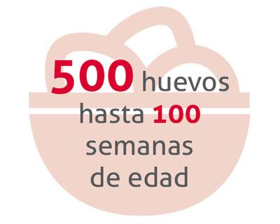 bienestar_gallinas_ponedoras.jpg