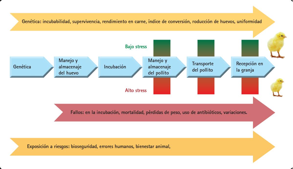 Fig1_Factores_que_influyen_en_la_calidad_del_pollito_reci_n_nacido.png